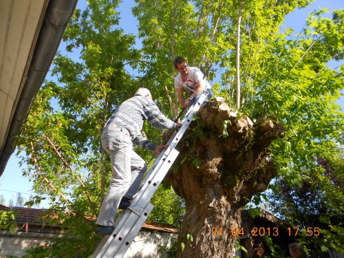 b Sur l'arbre.JPG