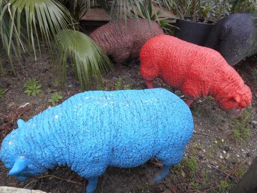 Moutons de couleur.JPG