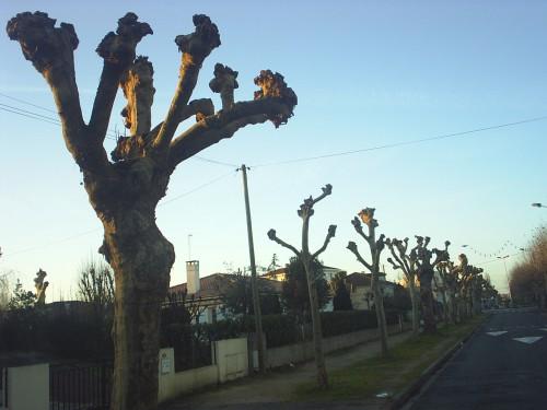 L'arbre à boules.JPG