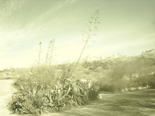 Plantes sèches sous le vent.JPG