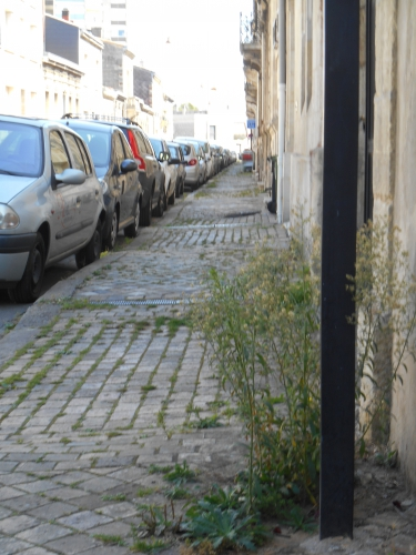 L'herbe sur le trottoir.JPG