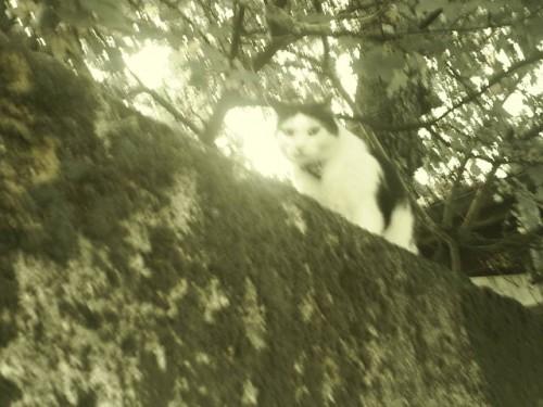 Le chat Teaudun.JPG