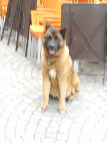 Le chien flou.JPG
