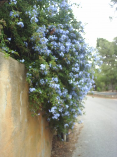 J'ai oublié le nom des fleurs.JPG
