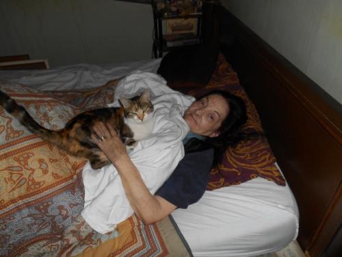 Le chat sur le drap.JPG