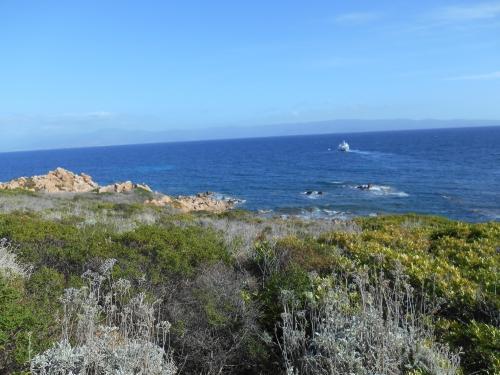 Sur la mer calme le baloigne qui s'éteaut.JPG